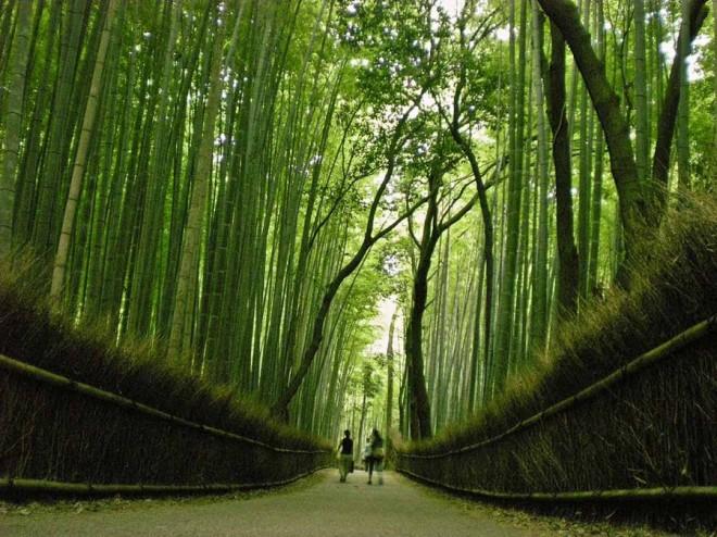 В Янонии множество разнообразных парков и лесов