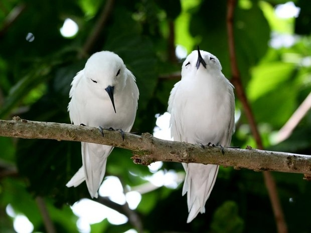 Птичий рай
