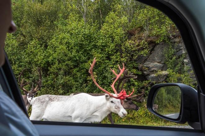 В Скандинавии вас ждет много красивых, необычных мест