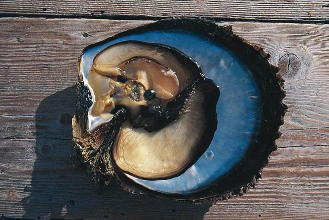 Ферма моллюсков