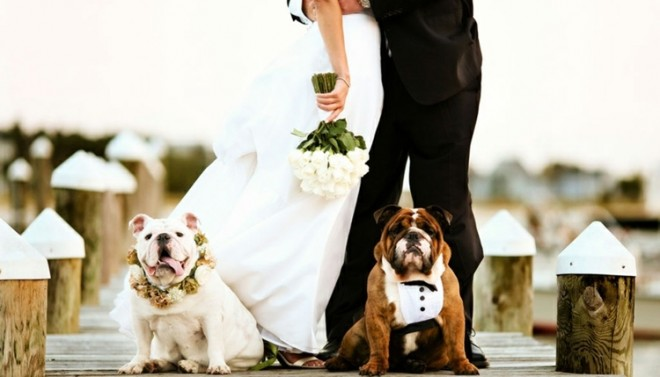Пригласите четвероногих друзей но свою свадьбу