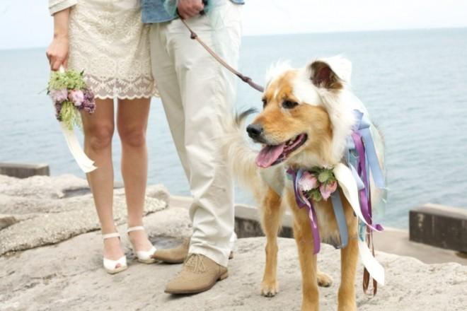Четвероногим модницам так же требуется свадебный наряд