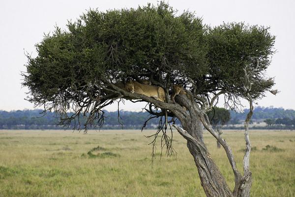 Любителей живой природы ожидает увлекательное фото-сафари в Африке