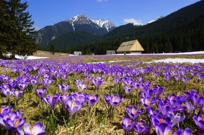 Весна в горох
