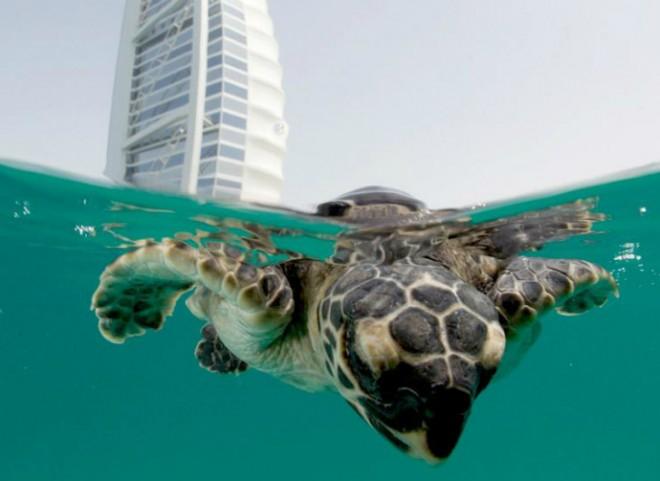 В Дубае много потрясающих зон отдыха для туристов и местных жителей