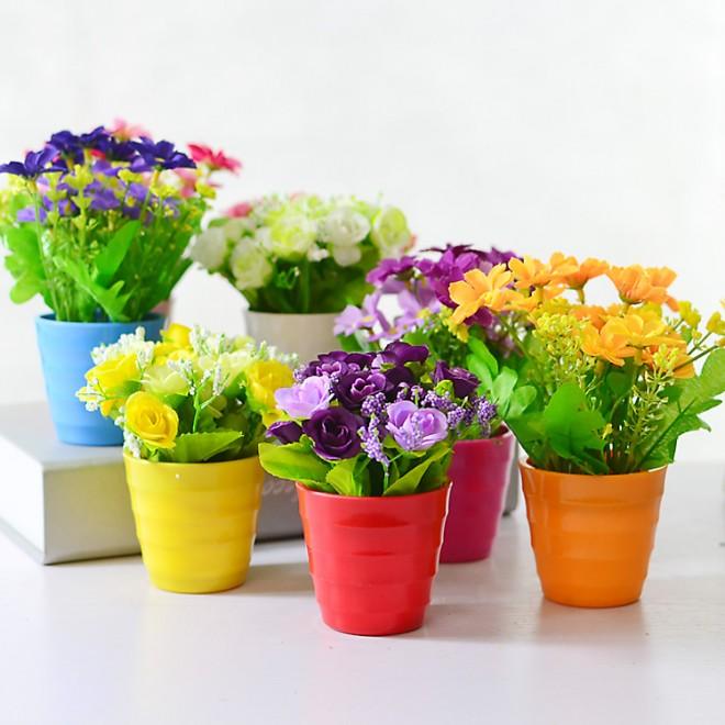 Комнатные цветы в качестве подарка