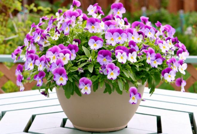 Роскошные цветы в керамическом горшке
